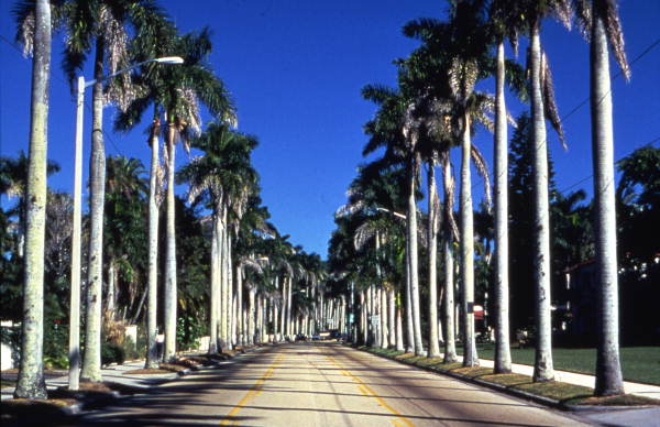 Royal Palms extended